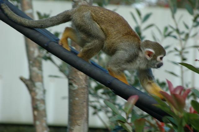 a real life monkey